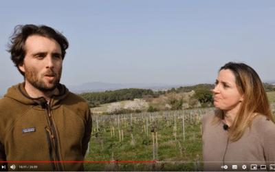 Interview d'Arthur Mayard sur la gestion agronomique Bio et agroécologique des Vignobles Mayard.